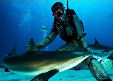 Viva Bahamas Shark Diving