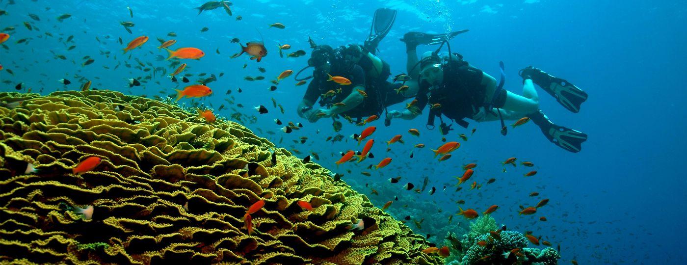 Safari nurkowe morze czerwone egipt sharm el sheikh - Reef oasis dive club ...