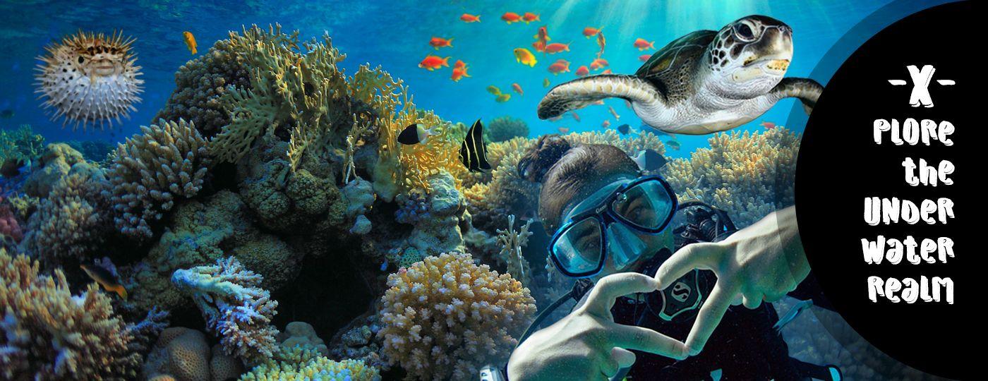 Diving in sharm el sheikh red sea reef oasis dive club - Reef oasis dive club ...