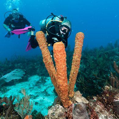 Tauchbasis in der dominikanischen republik bayahibe - Reef oasis dive club ...