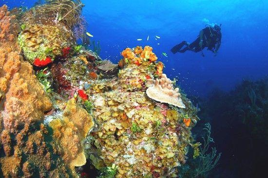 Tauchen fotogalerie grand bahama reef oasis dive club - Reef oasis dive club ...