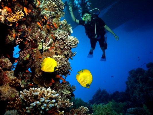 Diving photo gallery sharm el sheikh reef oasis dive club - Reef oasis dive club ...