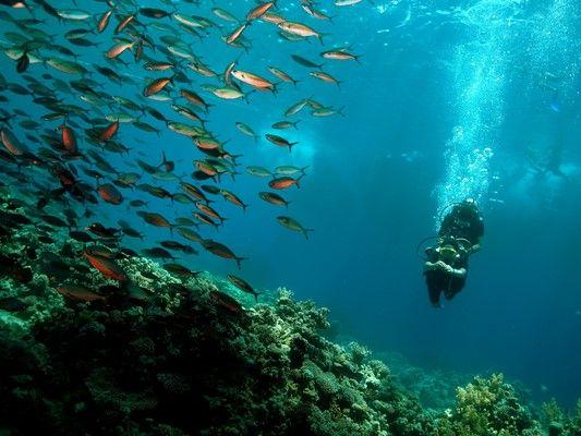 Tauchen fotogalerie sharm el sheikh reef oasis dive club - Reef oasis dive club ...