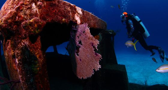 Papa doc wreck gran bahama diving