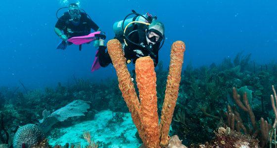 incontri per Scuba Divers UK migliori siti di incontri Monaco