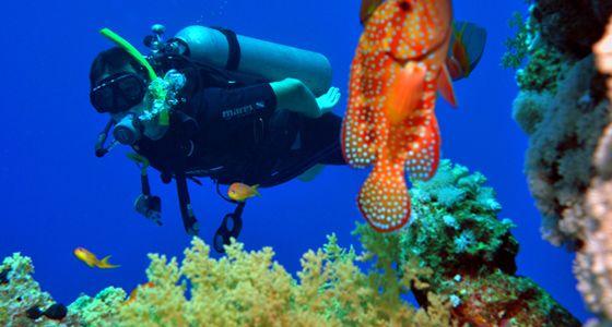 Tauchpl tze von sharm el sheikh rotes meer karte - Reef oasis dive club ...